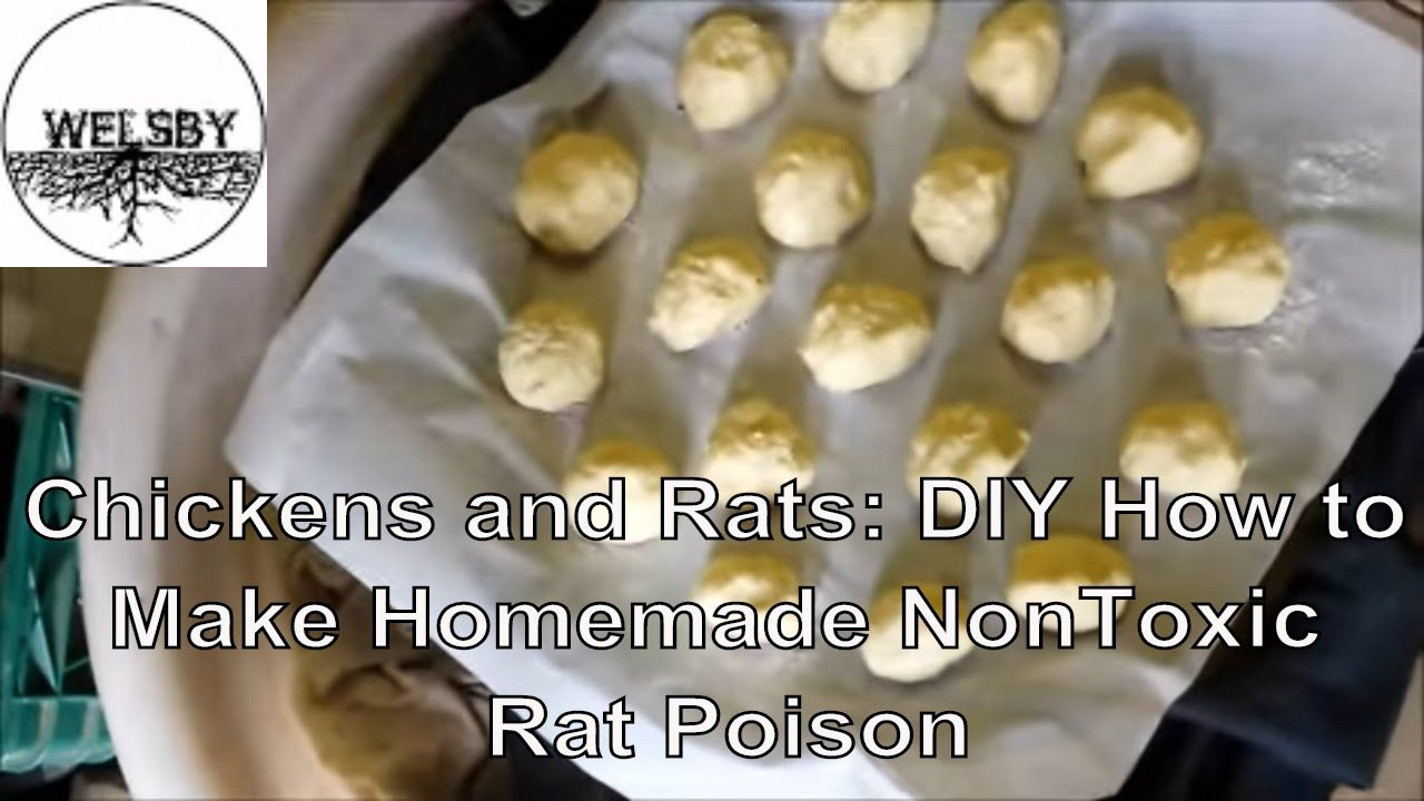 Chickens And Rats Diy How To Make Homemade Nontoxic Rat Poison Homemade Rat Poison Rat Poison Natural Repellent