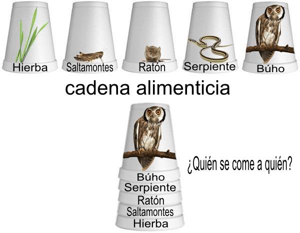 Cadena Alimenticia Clases De Ciencias Ciencias De La Naturaleza Ciencia Natural