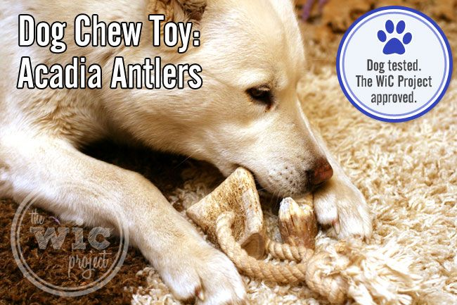 5 Durable Dog Chew Toys For Aggressive Chewers Dog Chews Dog