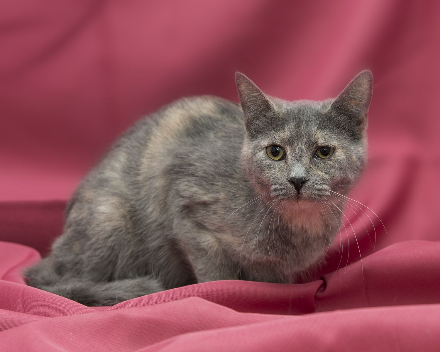 Lily Found Her Foreverhome On 02 22 14 Opt2adopt Livessaved Kittylove Humane Society Kitty Animals