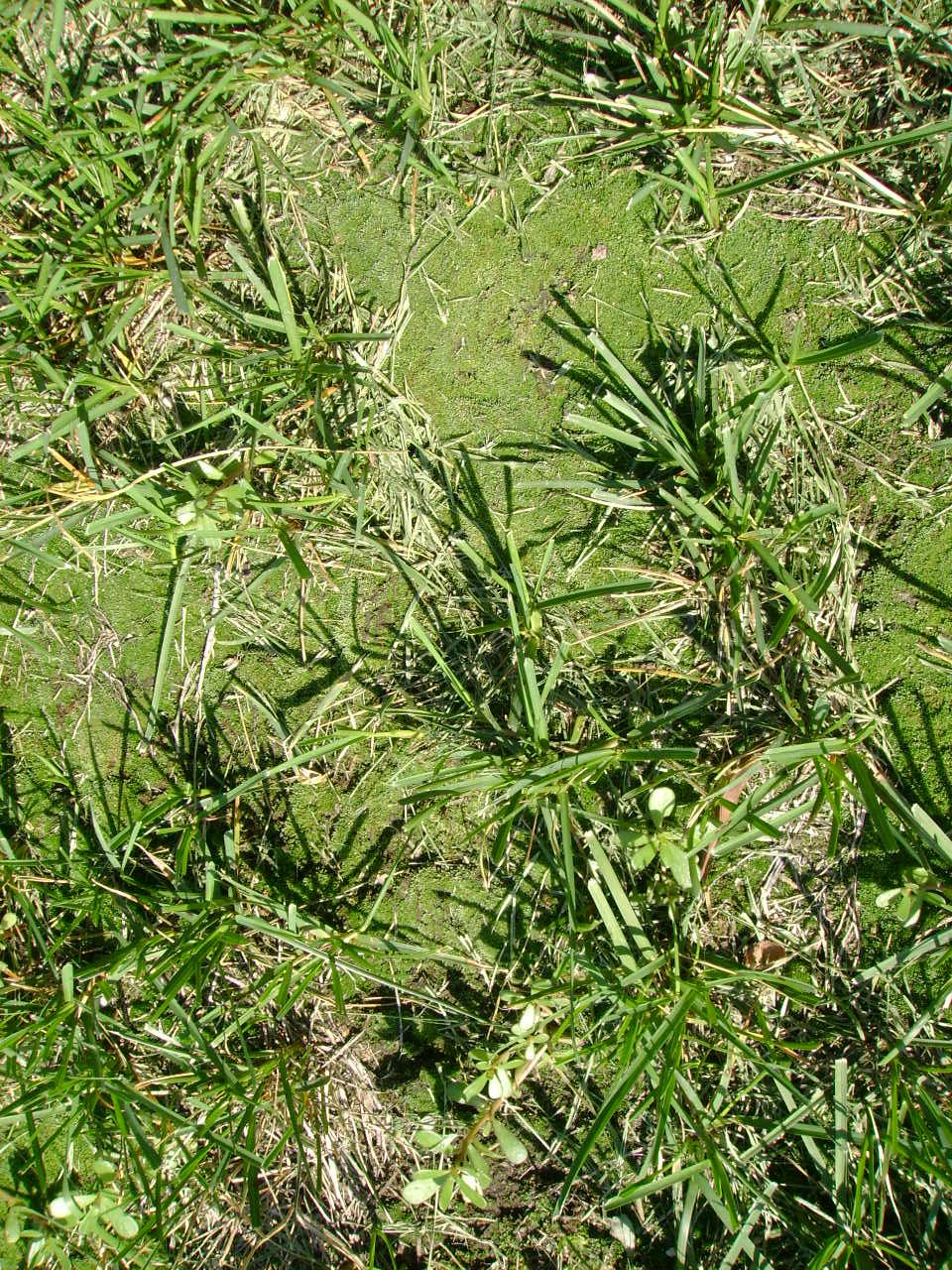How To Get Rid Of Moss In Grass Naturally