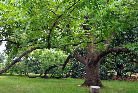 25 Different Types of Tree Species with Their Names and Uses
