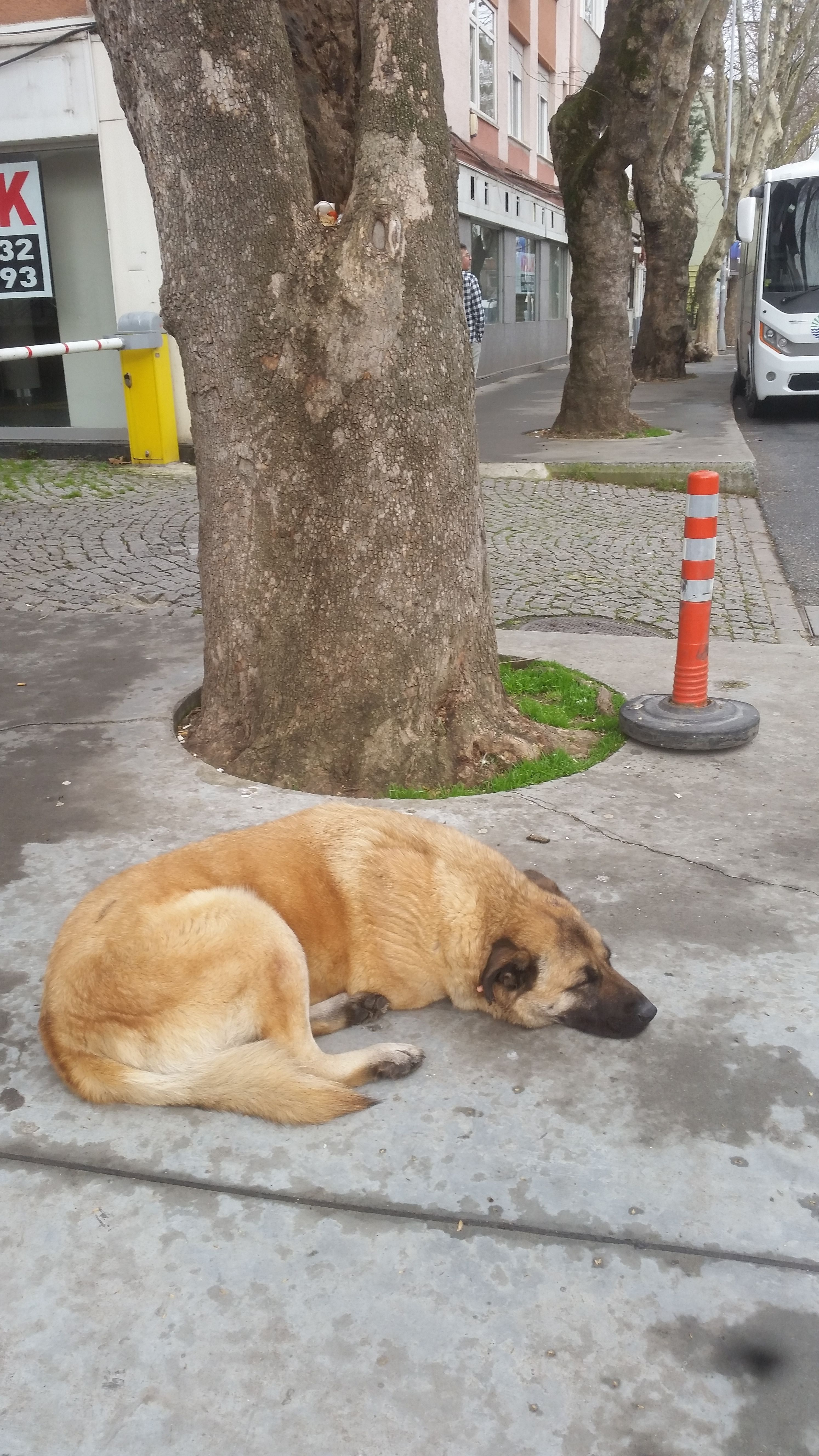 Strated Unhappy Straydogs Life Rights Respect Please Ca Castratedstraydogs Unhappystreetdogs Castratedstreetdogs