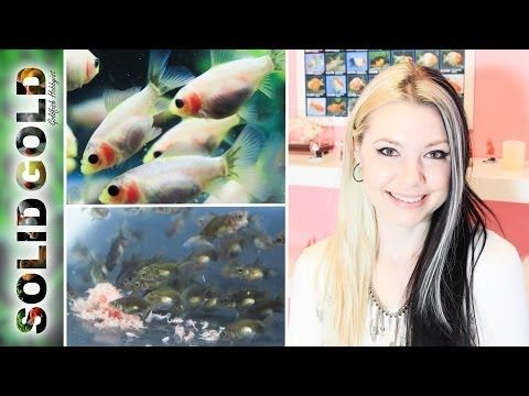 Around The Fish Room With Jennie Tank Talk Fishing Room Goldfish Tank Fish Tank