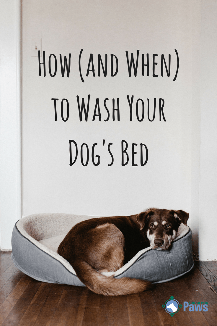 How (and When) to Wash Your Dog's Bed Dog cleaning, Dog
