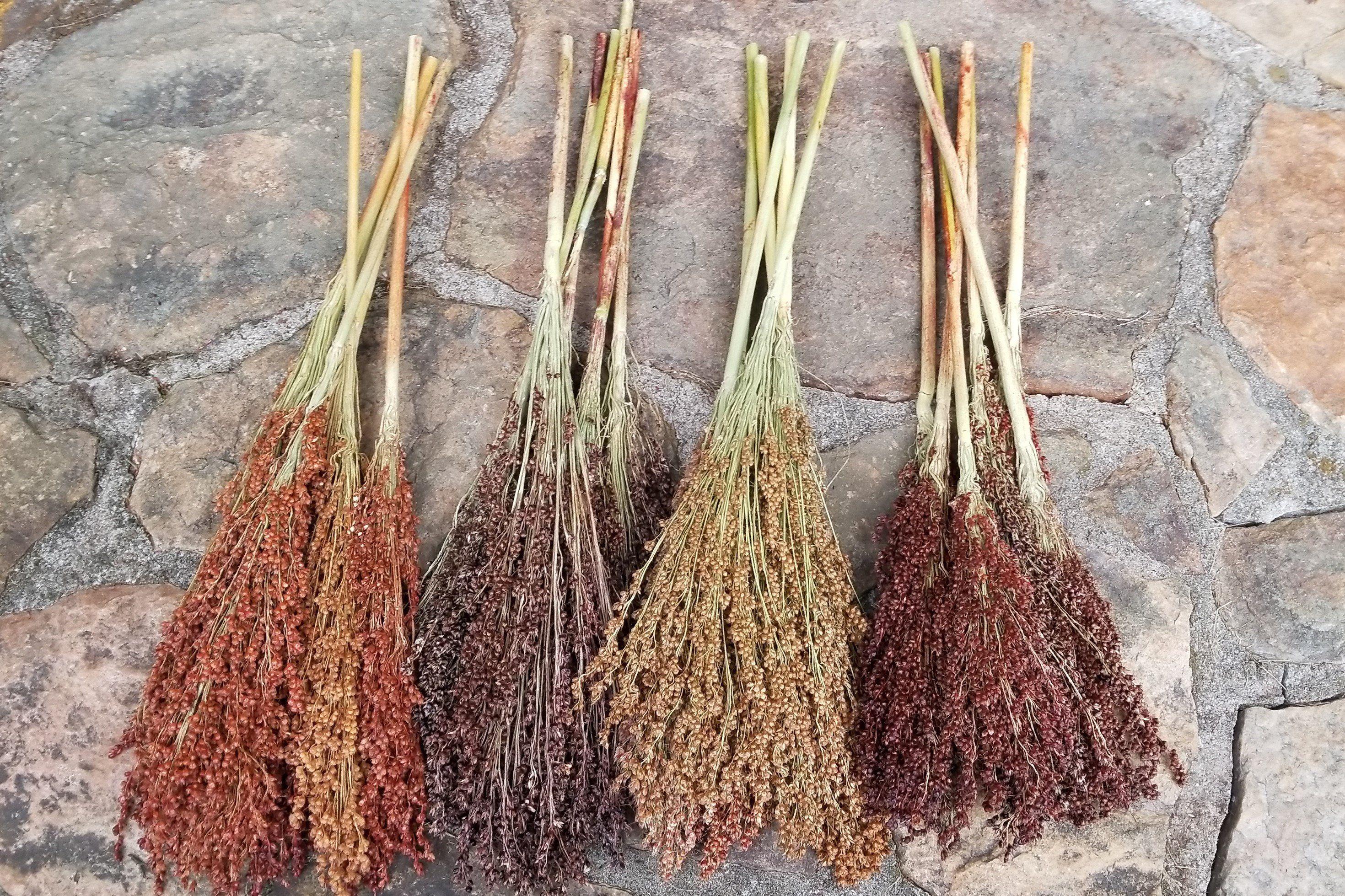 Dried Broom Corn Colored Broom Corn Colored Sorghum Upright Sorghum Broom Corn Fall Decor Halloween Decor Rustic D Broom Corn Broom Rustic Antique Decor