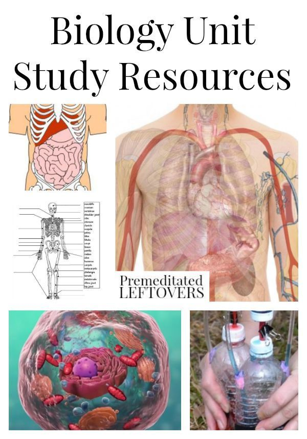 Biology Unit Study Resources including fun human biology lesson ...