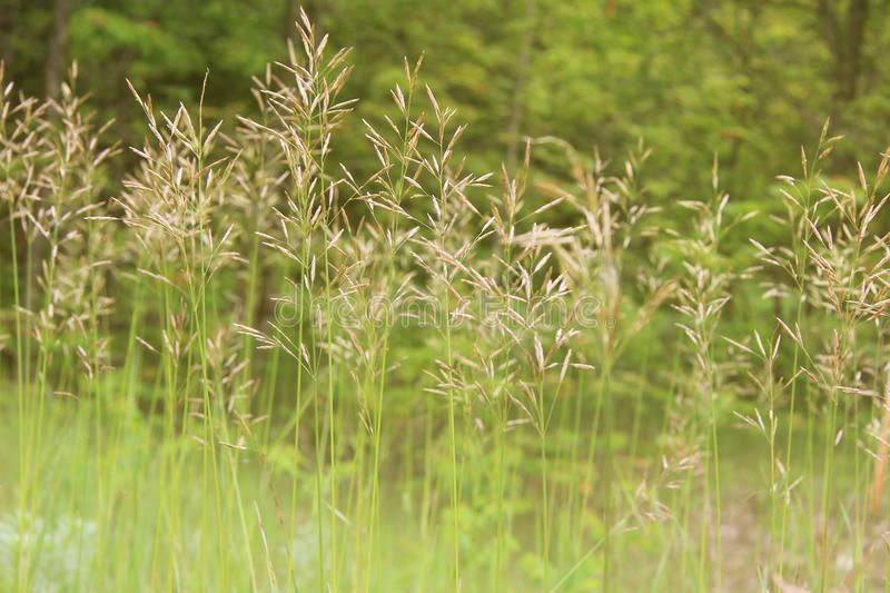 Tall Grass With Seed Heads Background Spon Grass Tall Seed Background Heads Ad Tall Grass Grass Plants