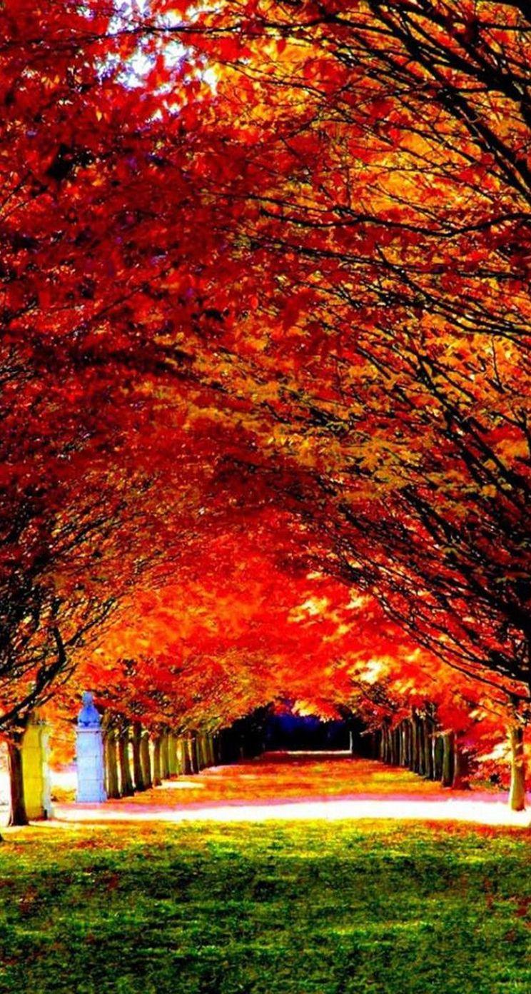 Wallpaper iphone autumn - Autumn Red Tree Road Iphone 5s Parallax Wallpaper