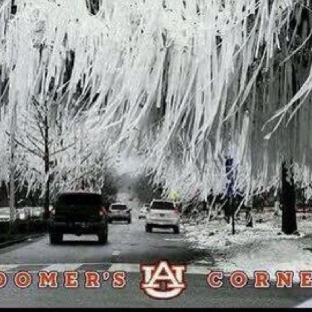 Rolling Toomer's Corner | War Eagle | Auburn alabama, Auburn