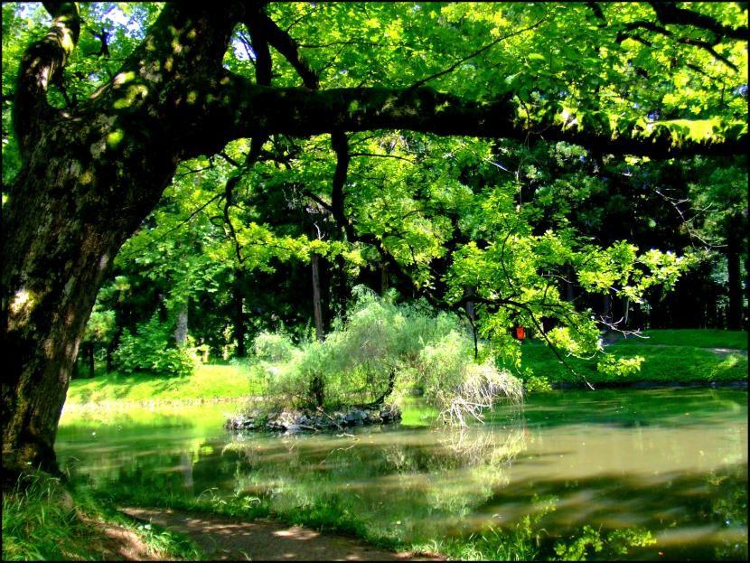 Los rboles son importantes para el jard n el arbol for Jardines con arboles y arbustos