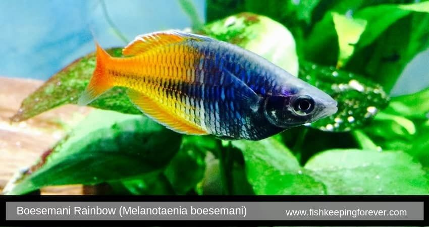 Starting A Freshwater Aquarium Especially With Popular Freshwater Fish Is One Of The Most Exciting Par Freshwater Fish Eel Like Fish Tropical Freshwater Fish