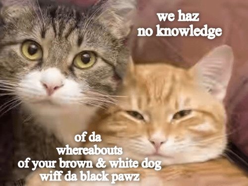 Way Too Much Information Funny Cute Cats Cute Funny Animals Funny Cat Pictures