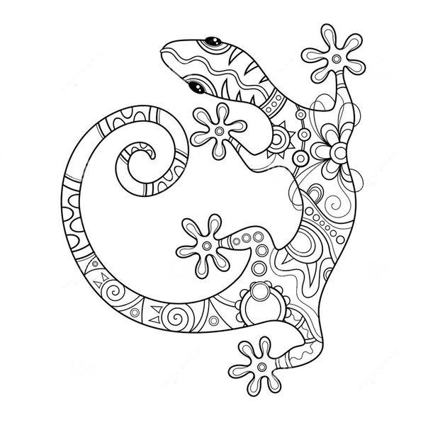 Image result for gecko adult coloring pages favorite for Gecko coloring pages