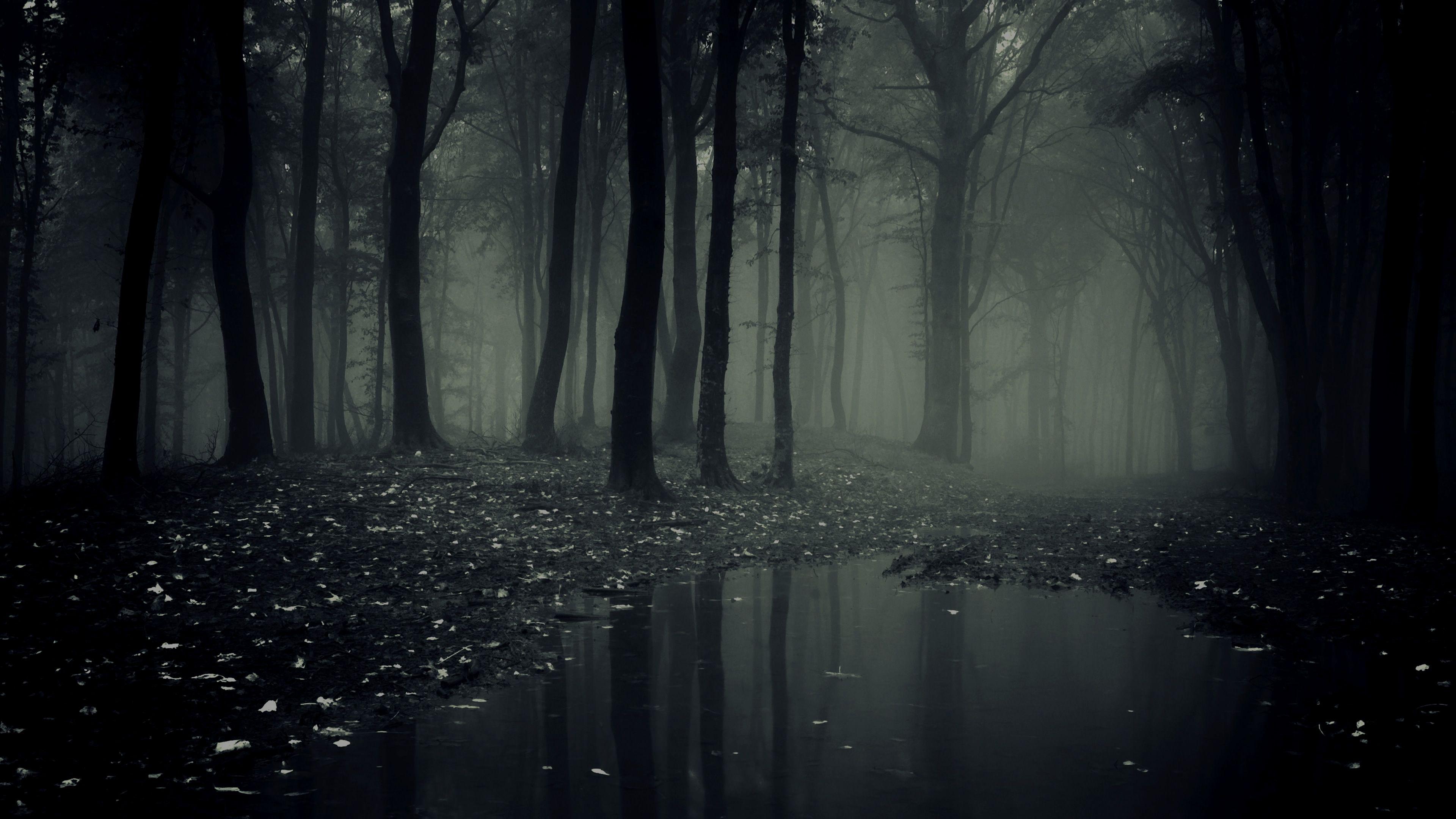 Forest Dark wallpaper