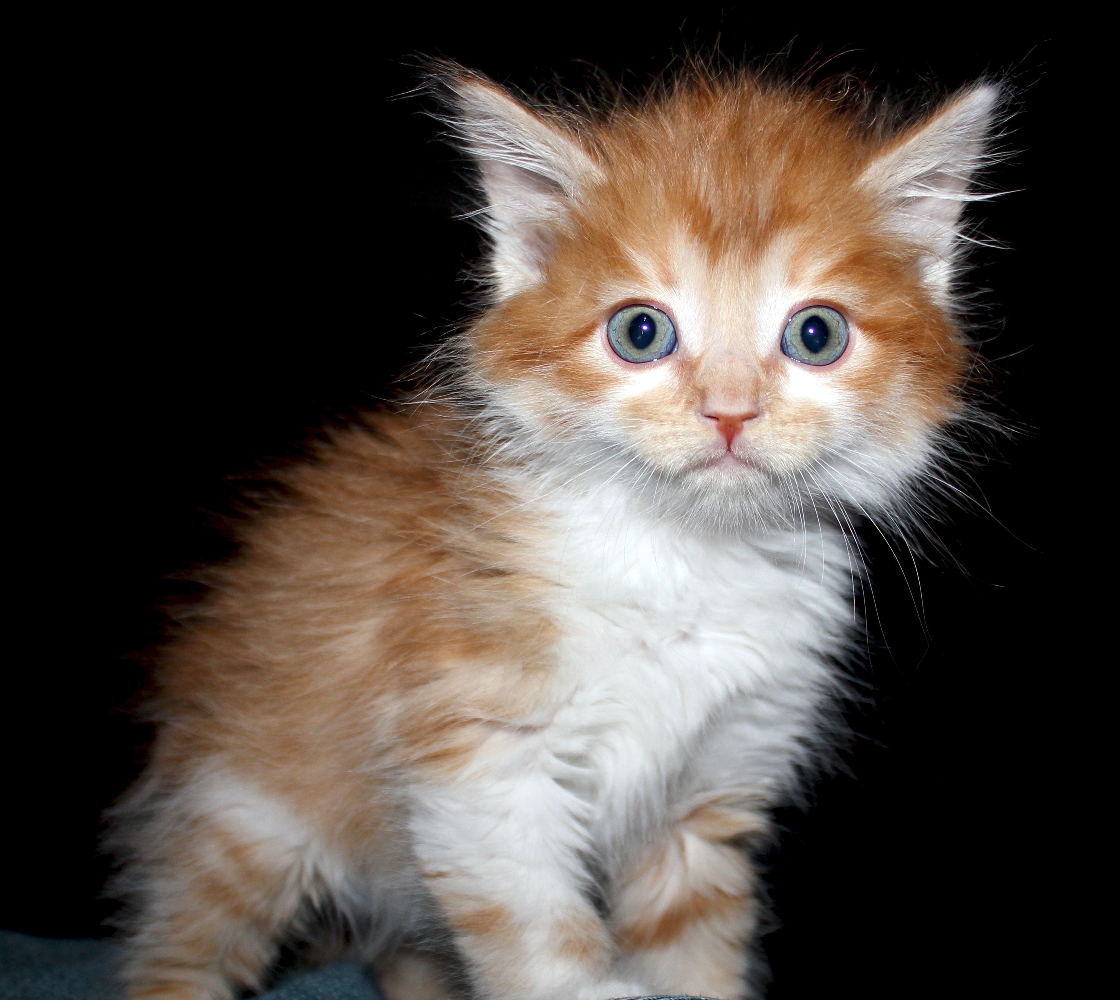 Grumpy orange kitten orange kittens kittens grumpy cat