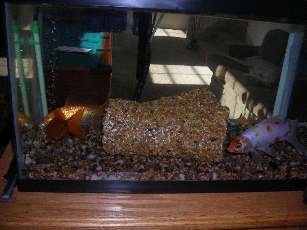 diy aquarium tunnel petdiys com craftiness diy aquarium rh pinterest com