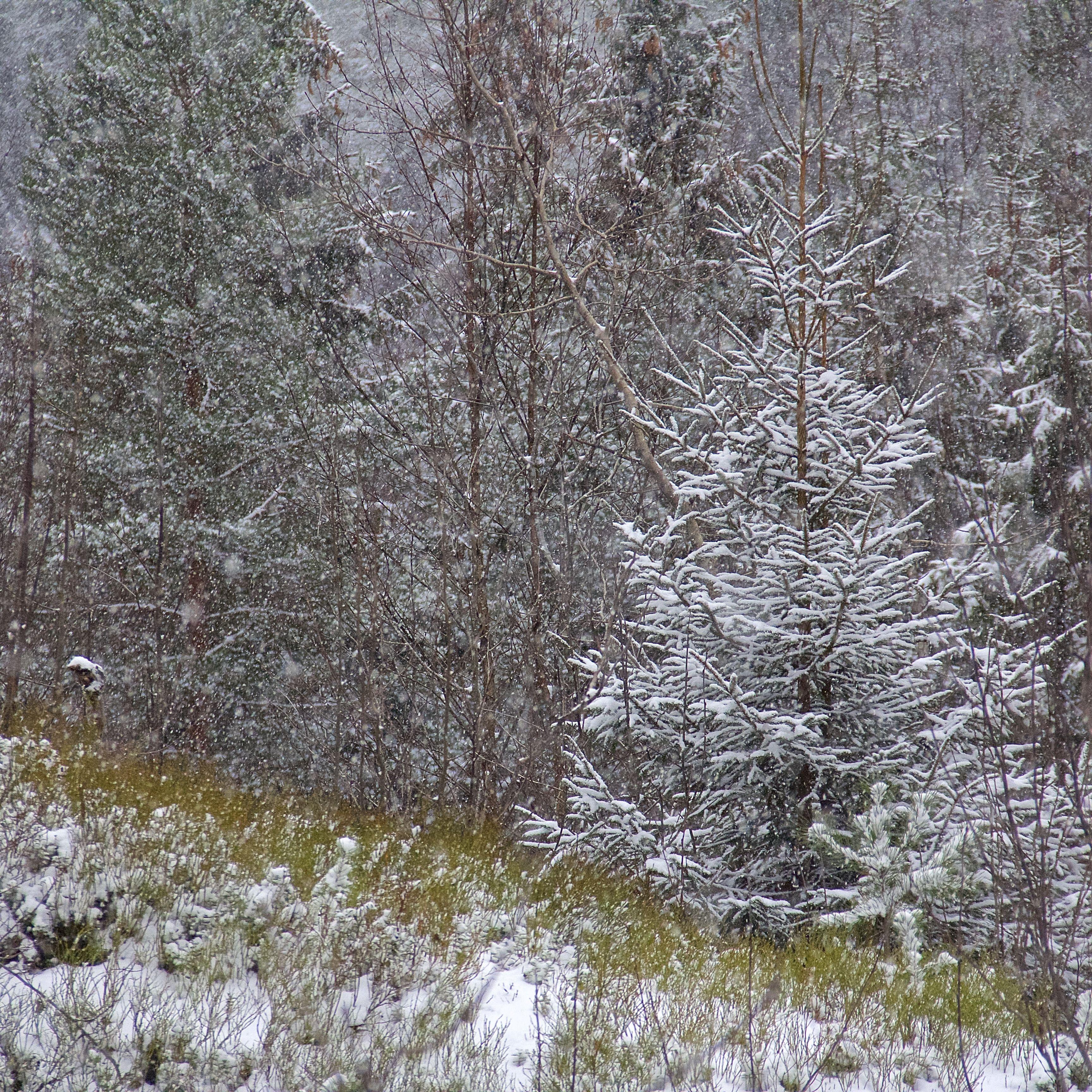 The colors of winter. Åse Margrethe Hansen, 2015