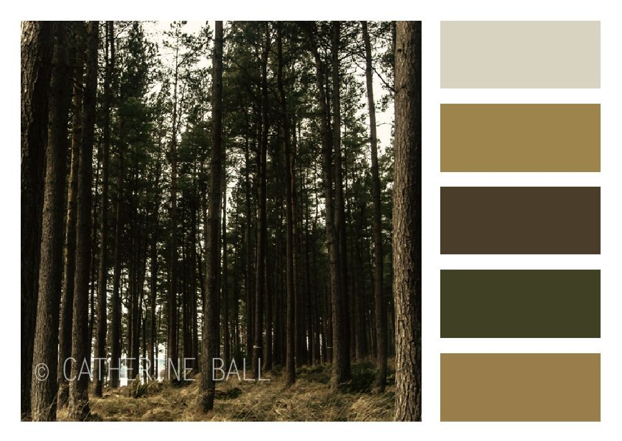 Forest colour palette, muted tones of brown and green ...