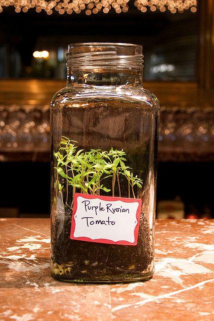 wedding favors seedlings