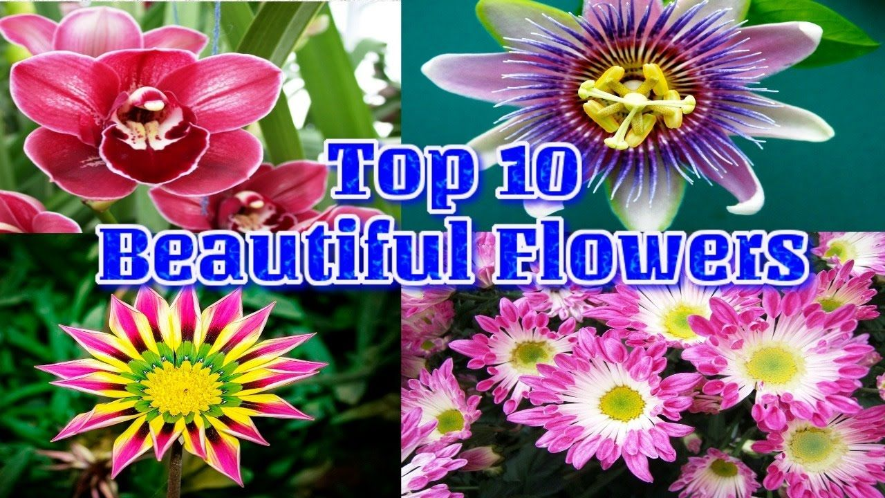 Top 10 beautiful flower you see to amuse amazing flowers videohd top 10 beautiful flower you see to amuse amazing flowers videohd izmirmasajfo