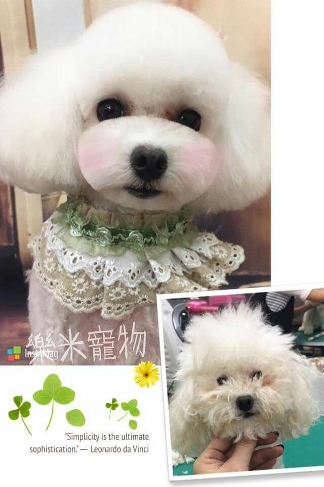 Repinned Before After Grooing Groom A Zoom Zoom Pinterest