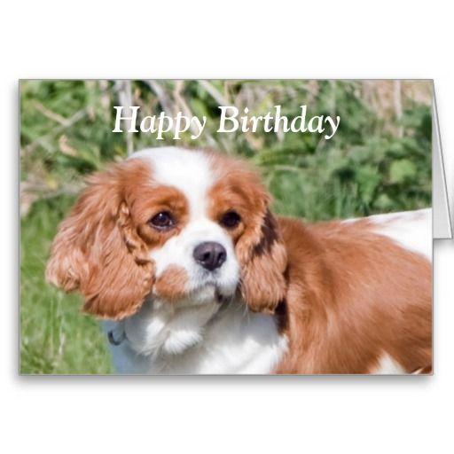 Cavalier King Charles Spaniel Happy Birthday Card Greeting Cards