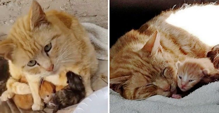 Stray Cat Keeps Her Kittens Warm From The Rain Until Rescue