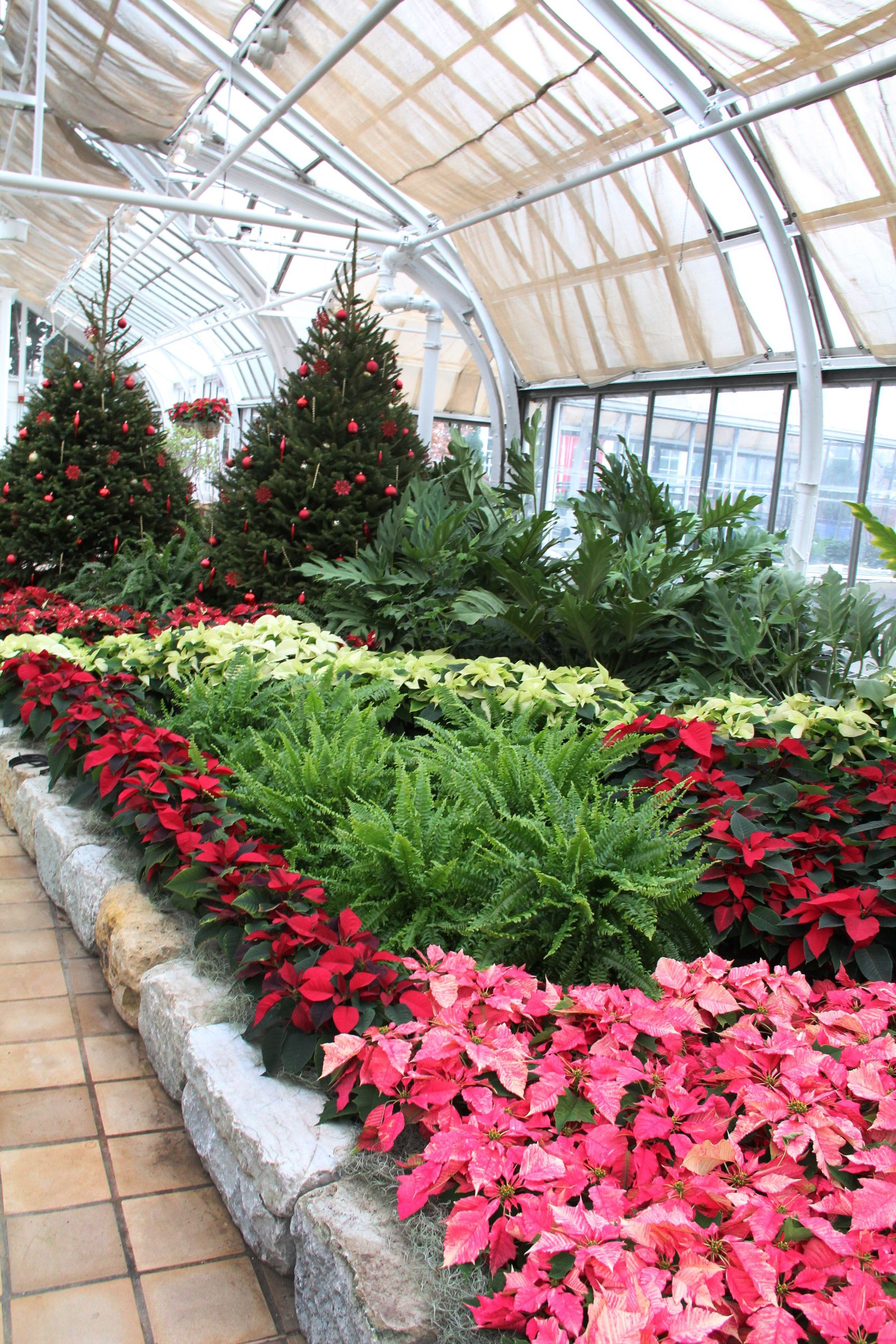 Check Out This Year S Holiday Poinsettia Display At Franklin Park