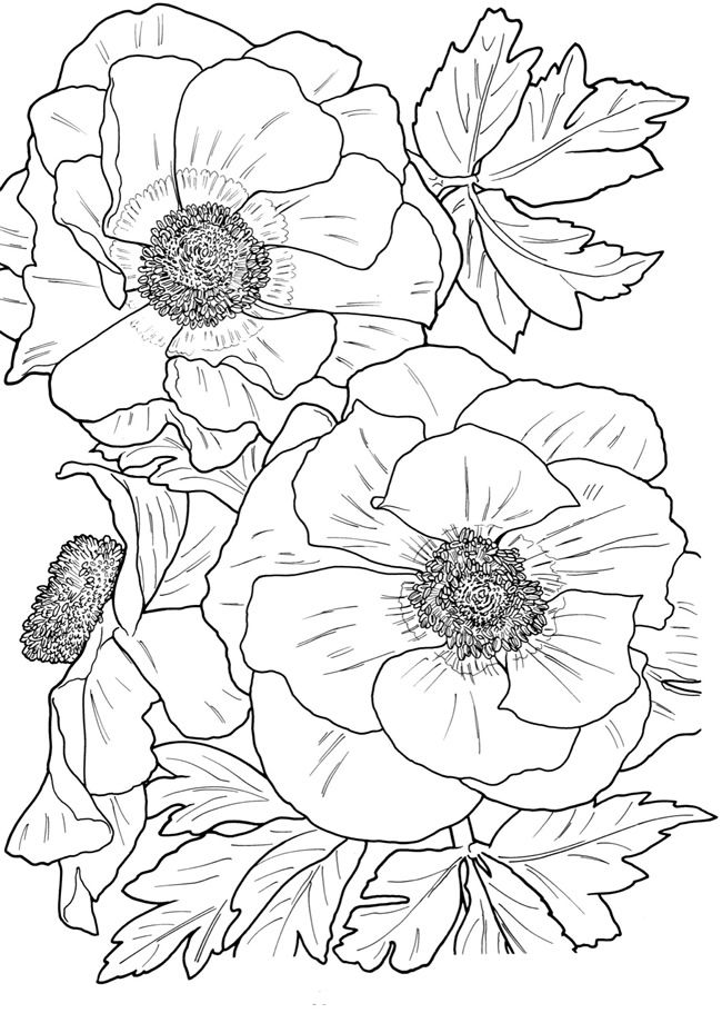 Flower Coloring Pages for Adults | Flower coloring pages, Coloring ...