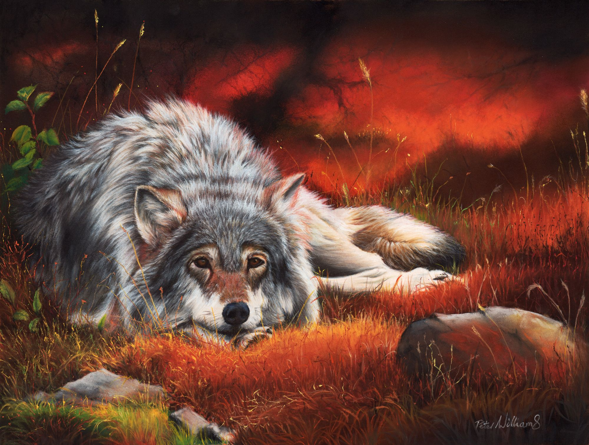 In natures wake nova art art wolf artwork