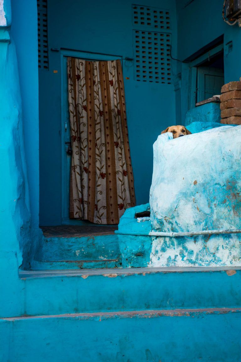 Photos the streets and people of the Blue City of Jodhpur