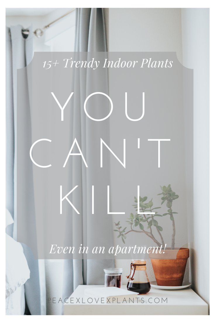 15+ Trendy Indoor Plants You Can't Kill Indoor plants