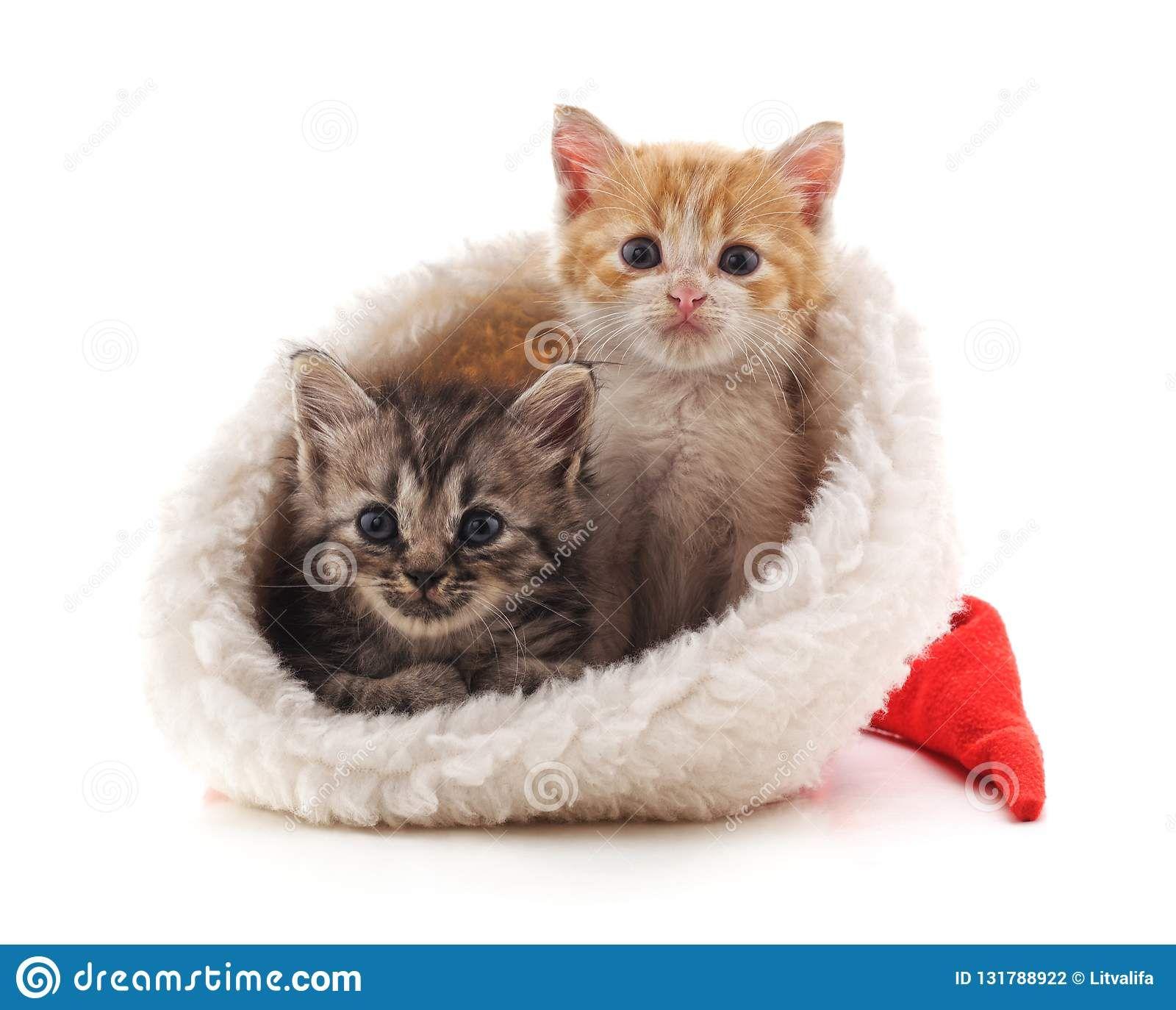 Little Kittens In A Christmas Hat Merrychristmas Christmas Cats Kitten Images Little Kittens Christmas Hat