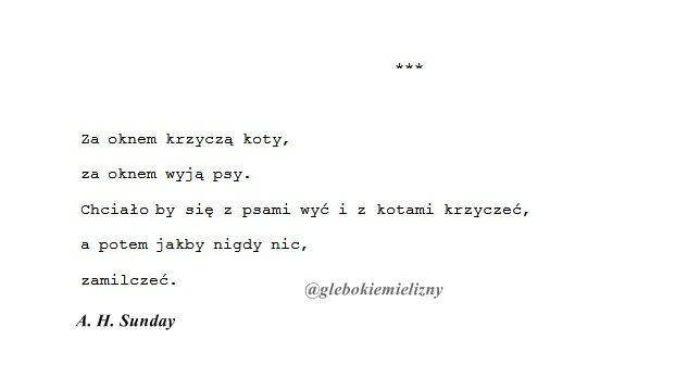 Poetry Poem Poezja Wiersze Wiersz Cats Koty Tumblr