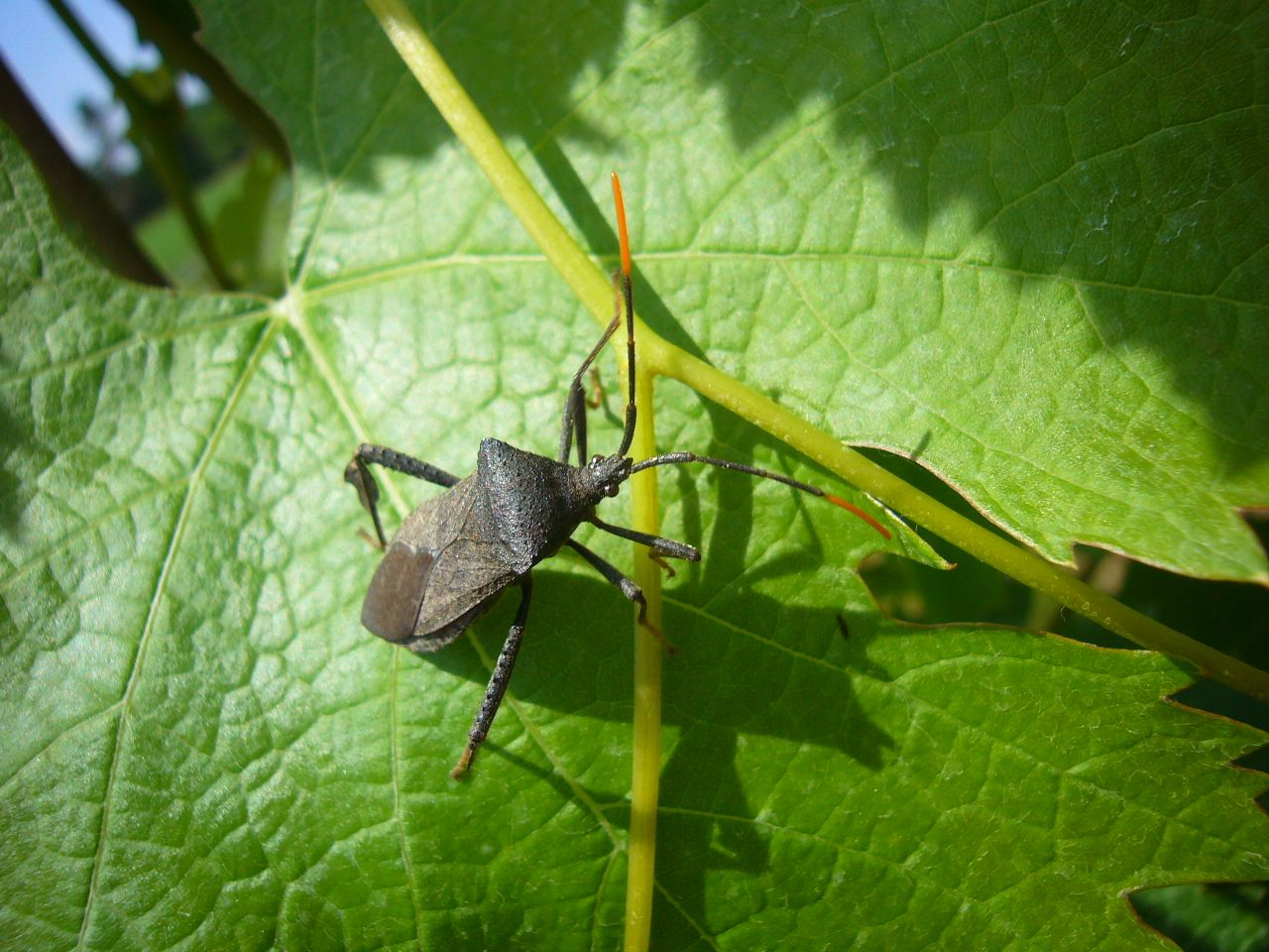 Pest Control Occasional Invaders Greenville SC Walker