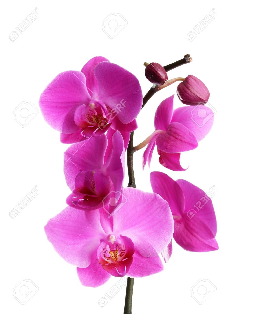 Branch With Beautiful Tropical Orchid Flowers On White Background Sponsored Ad Tropical Beautiful Branch Orc In 2020 Orchid Flower Orchids White Background