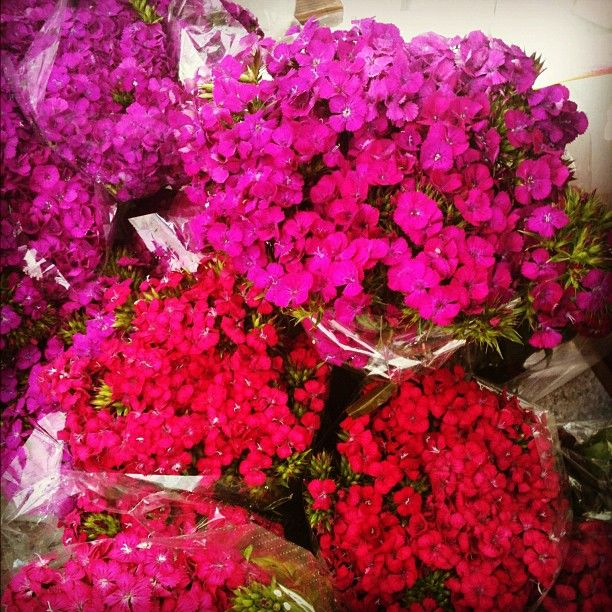 #Beautiful #blooms at the #MelrosePlace #FarmersMarket #westhollywood #sunday