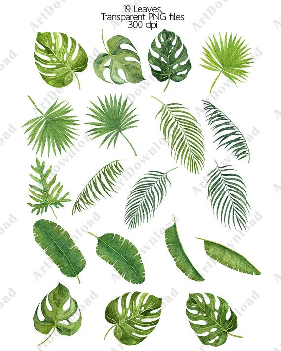 Watercolor Tropical Leaves Clipart Leaf Clipart Clip Art