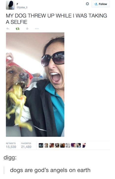 Dog Throwing Up Meme : throwing, Ewww!!, Funny, Memes,, Throwing, Memes