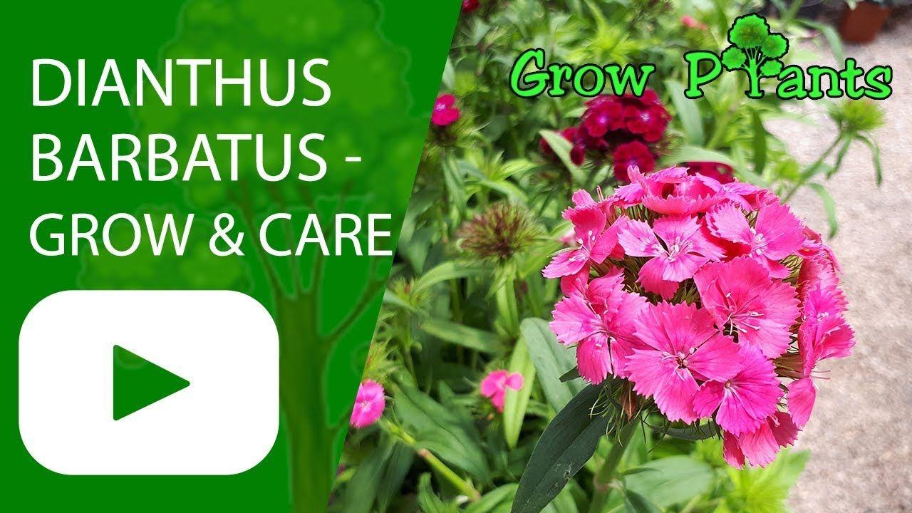 Pin On Growing Plants Youtube