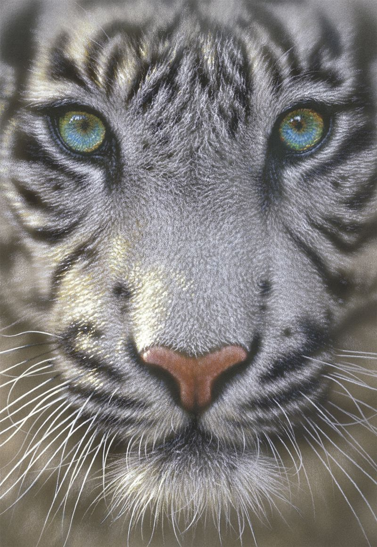 White Tiger Pet tiger, Beautiful cats, Animals beautiful