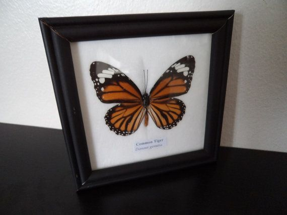 Butterfly collection xxx