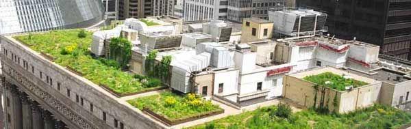 El Ejecutivo Deberá Fomentar La Creación De Terrazas Verdes