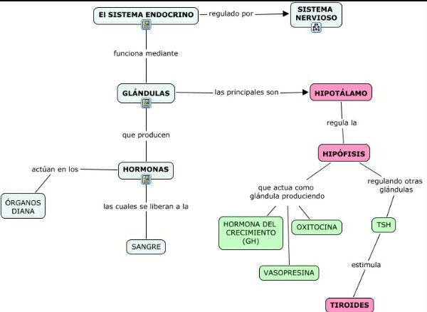 Esquema Sistema Endocrino | Dibujo in 2018 | Pinterest