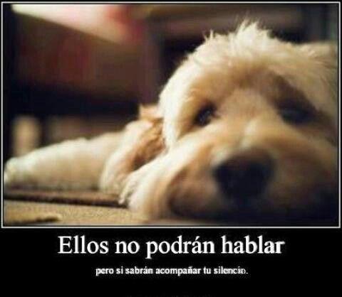Amor Sincero Perros Frases Perros Y Imagenes De Perros