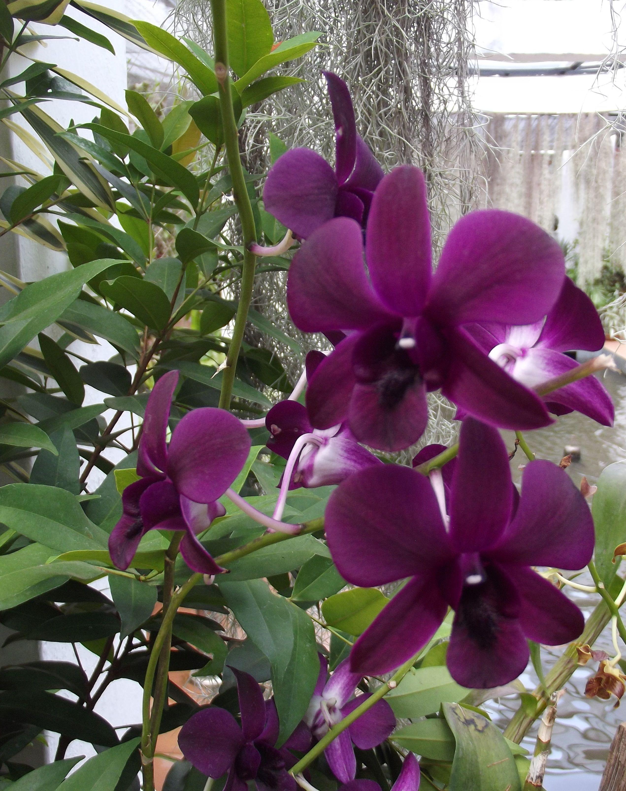 Orchid House Royal Botanic Gardens Peradeniya Kandy Sri Lanka Photography M Rizmy