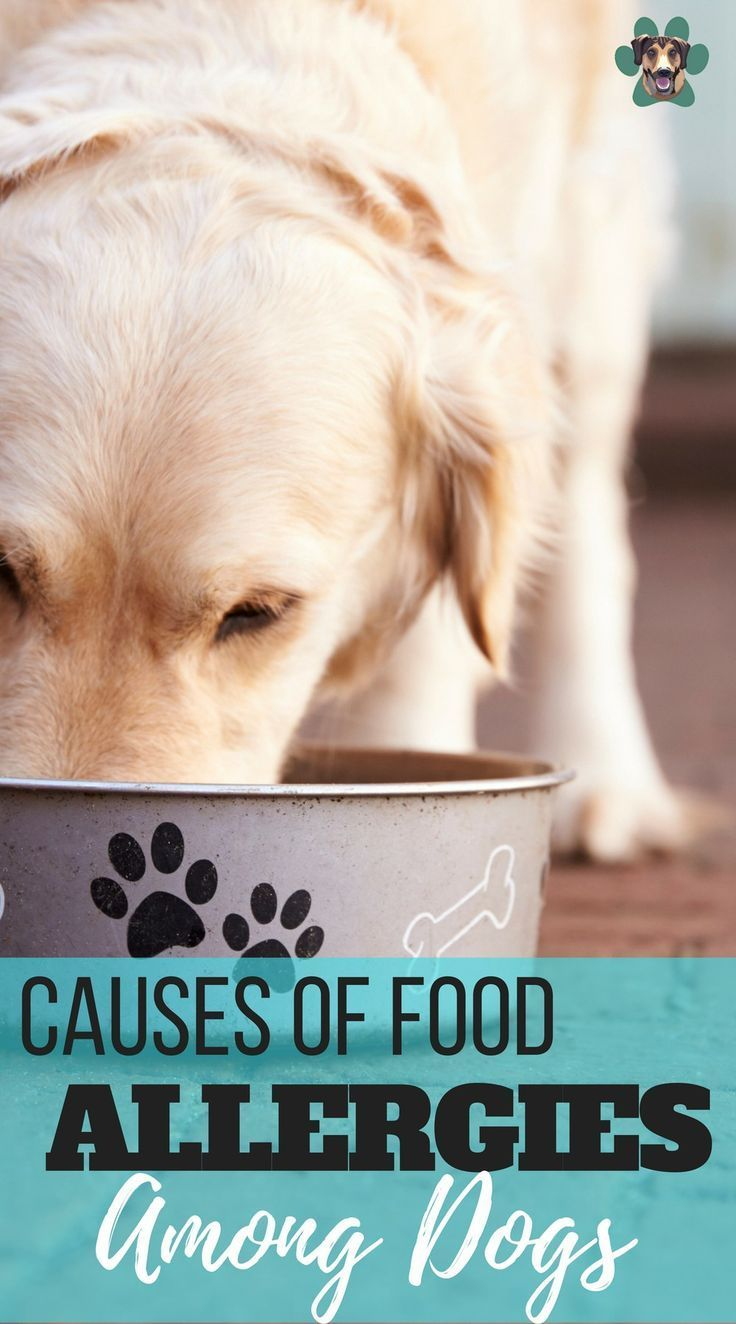 Five Causes Of Food Allergies Among Dogs Food Allergies Dog