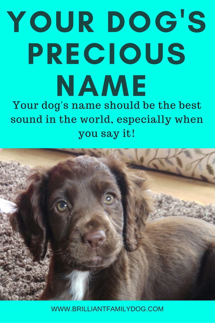 How Precious Is Your Dog S Name In 2020 With Images Dog Training Your Dog