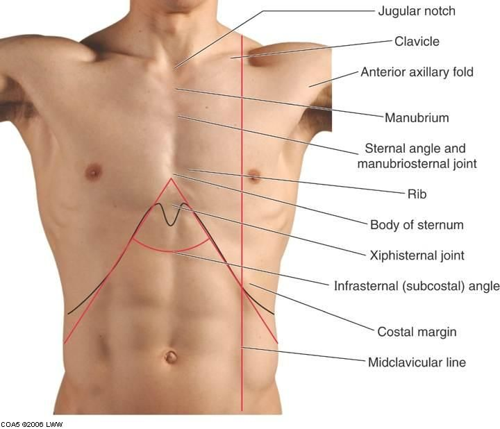 Image Result For Surface Anatomy Of Pectoral Region Body Anatomy